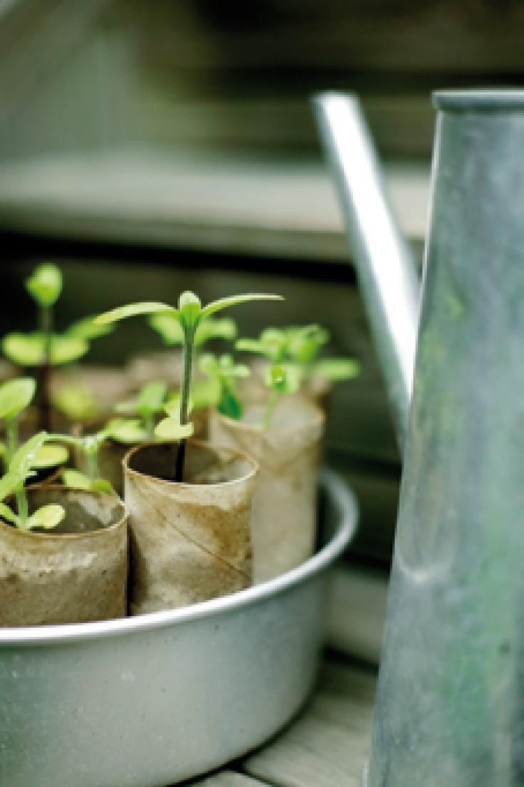 Toilet Paper Rolls for Seedlings
