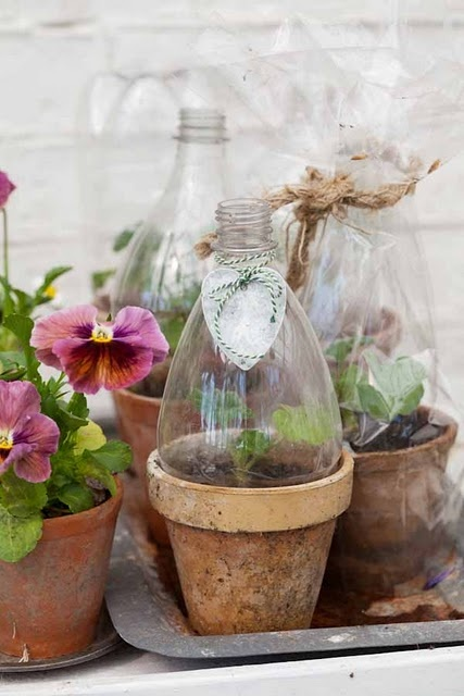 Start Seeds using Plastic/Recycled Containers