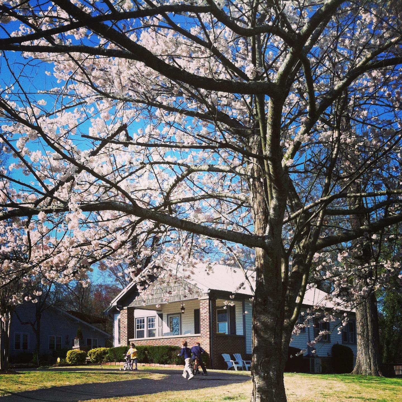 Spring (Home) Maintenance via Nest of Posies