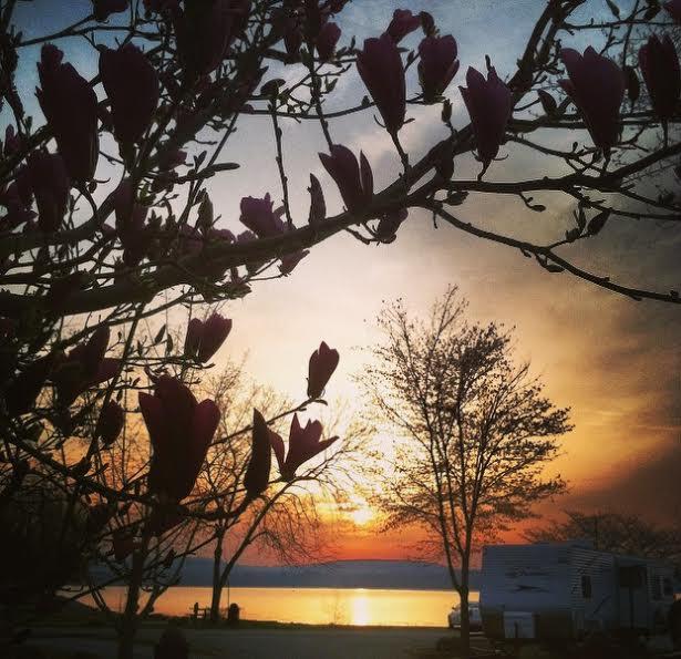morning sunrise camping (1)