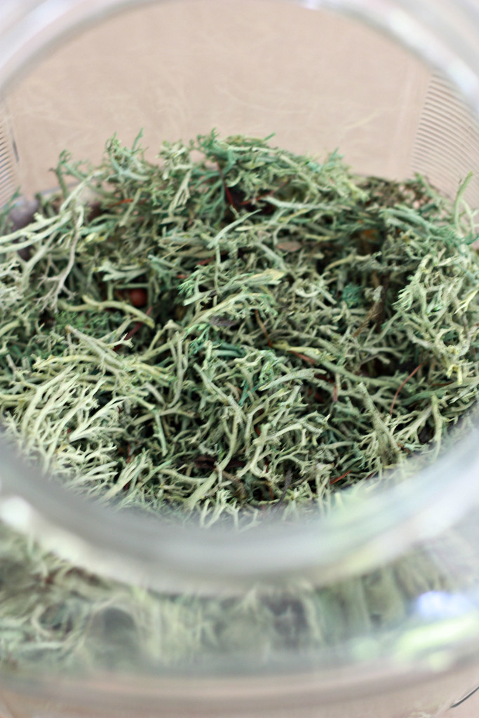 Create a Halloween Terrarium with rocks and moss