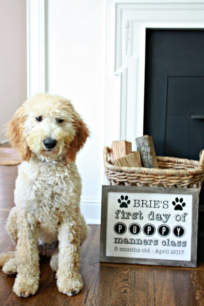 Puppy's First Day of Class Free Printable Signs
